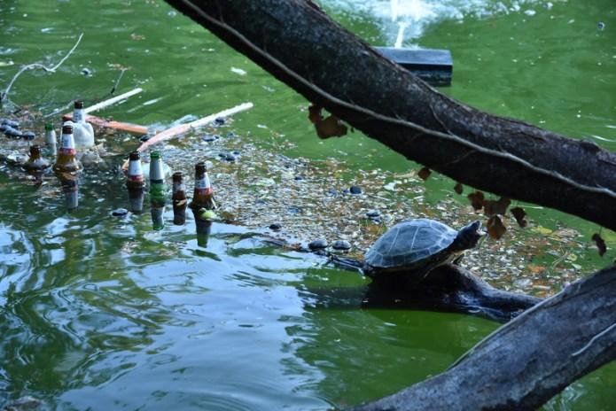 grido della tartaruga ai giardini margherita -bologna