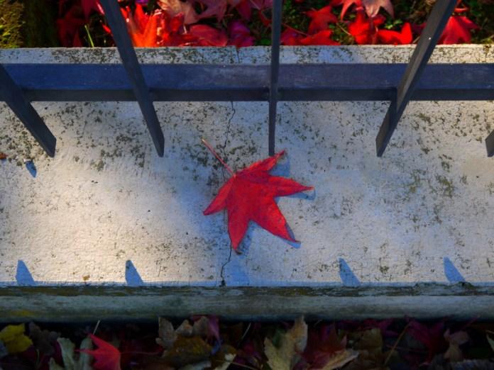 Semplicemente autunno