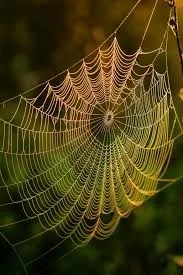 The Spider as a Spiritual Symbol