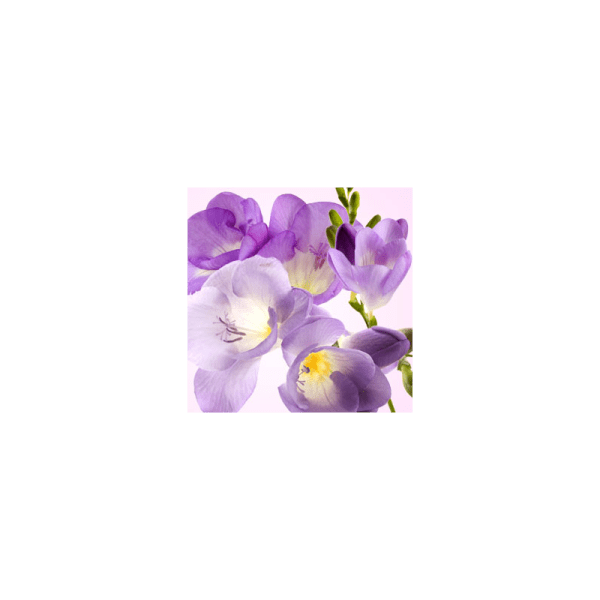 Freesia Fragrance Oil (1/4 ounce)