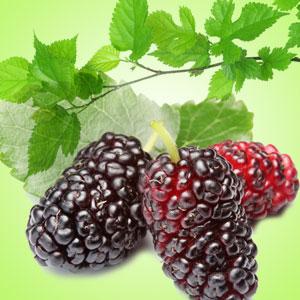 Mulberry Fragrance Oil (1/4 ounce)