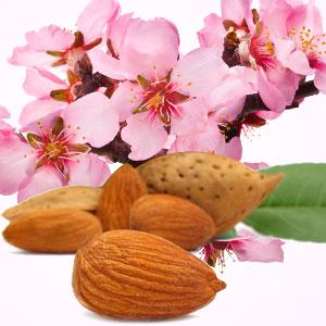 Almond Fragrance Oil ( Size A - 1/4 ounce)