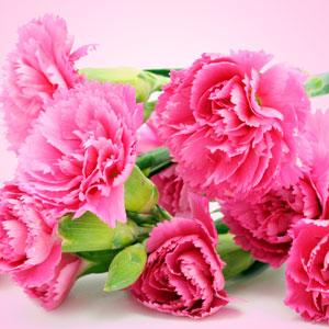 Carnation Fragrance Oil ( Size B - 1 ounce)