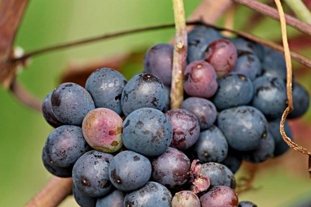 Nuevo conflicto en el mundo del vino en Europa