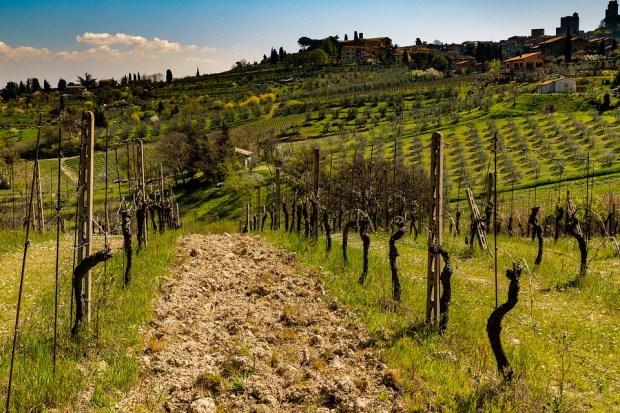 uvas autóctonas italianas