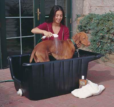 Bañar perro