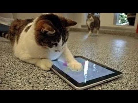 gatos y los iPads