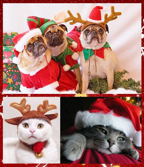 Accesorios y ropa para mascotas con motivos navide os - Novedades para mascotas ...