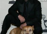Adiestramiento para perros