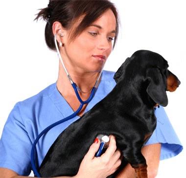 Cuidados de veterinaria