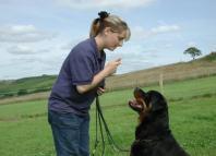 Adiestramiento para perros-entrenamiento