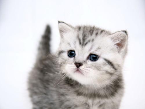 toxoplasmosis de los gatos