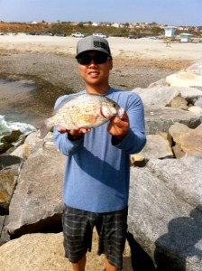Quality Barred Surf Perch off the rocks