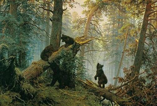 медведи ранним утром в сосновом лесу