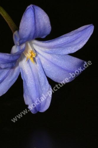 Blumen und Blüten blau