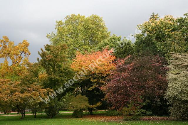 Bäume - Wald - Waldfrüchte - Blätter - Holz