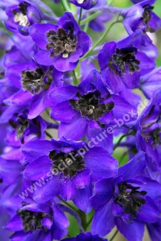 Blumen - Blüten - Lila