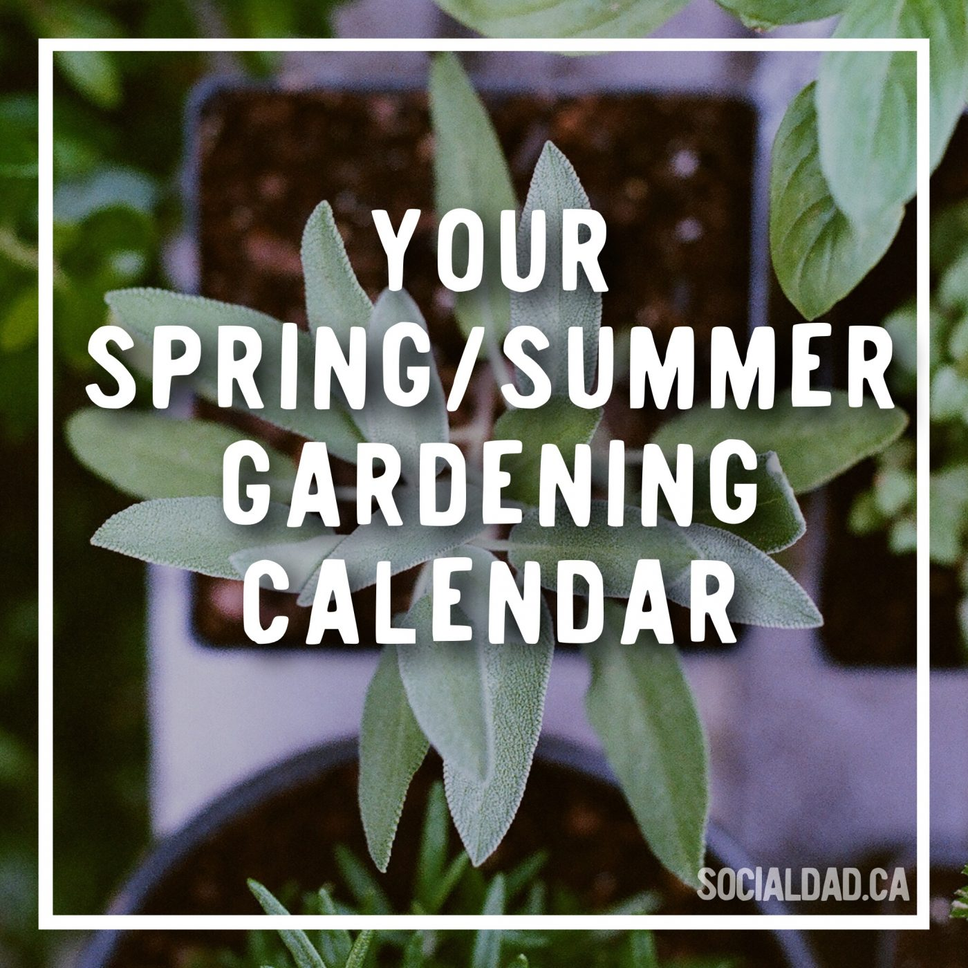 gardening calendar, when to plant vegetables, canadian dad, dad blog, parenting blog, social dad, vancouver blog, fatherhood, gardening ideas, family gardening, vancouver blog, best vancouver blog