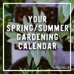 gardening calendar, when to plant vegetables, canadian dad, dad blog, parenting blog, social dad, vancouver blog, fatherhood, gardening ideas, family gardening, vancouver blog, best vancouver blog
