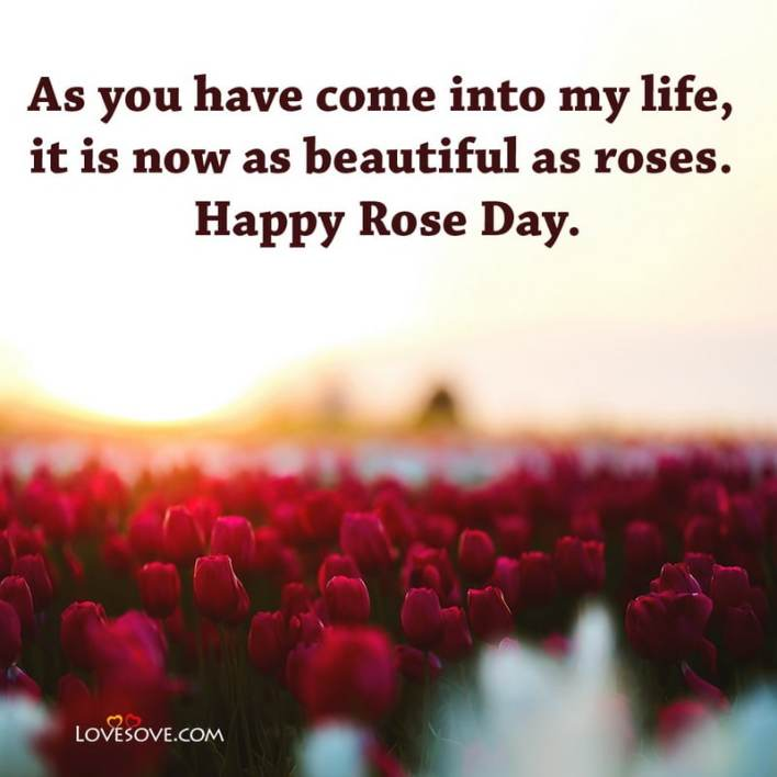 Rose Day Wishes For Wife In Hindi, Rose Day Wishes In Hindi, Rose Day Wishes For Love, Rose Day Wishes For Girlfriend In English, Romantic Rose Day Wishes For Husband, Rose Day Wishes To Wife, Rose Day Special Wishes,