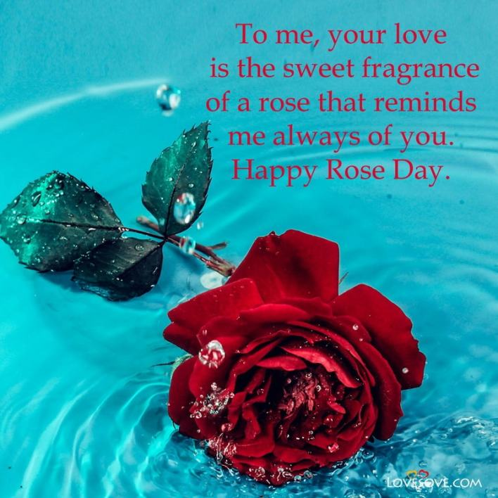 Happy Rose Day Romantic Quotes, Happy Rose Day Images And Quotes, Happy Rose Day Special Quotes, Happy Rose Day With Quotes, Happy Rose Day Pics With Quotes,