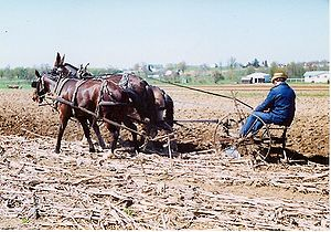 Amish farmer plowing fields with mules