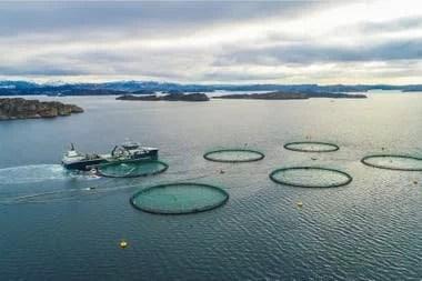 Una piscifactoría de salmones en Noruega
