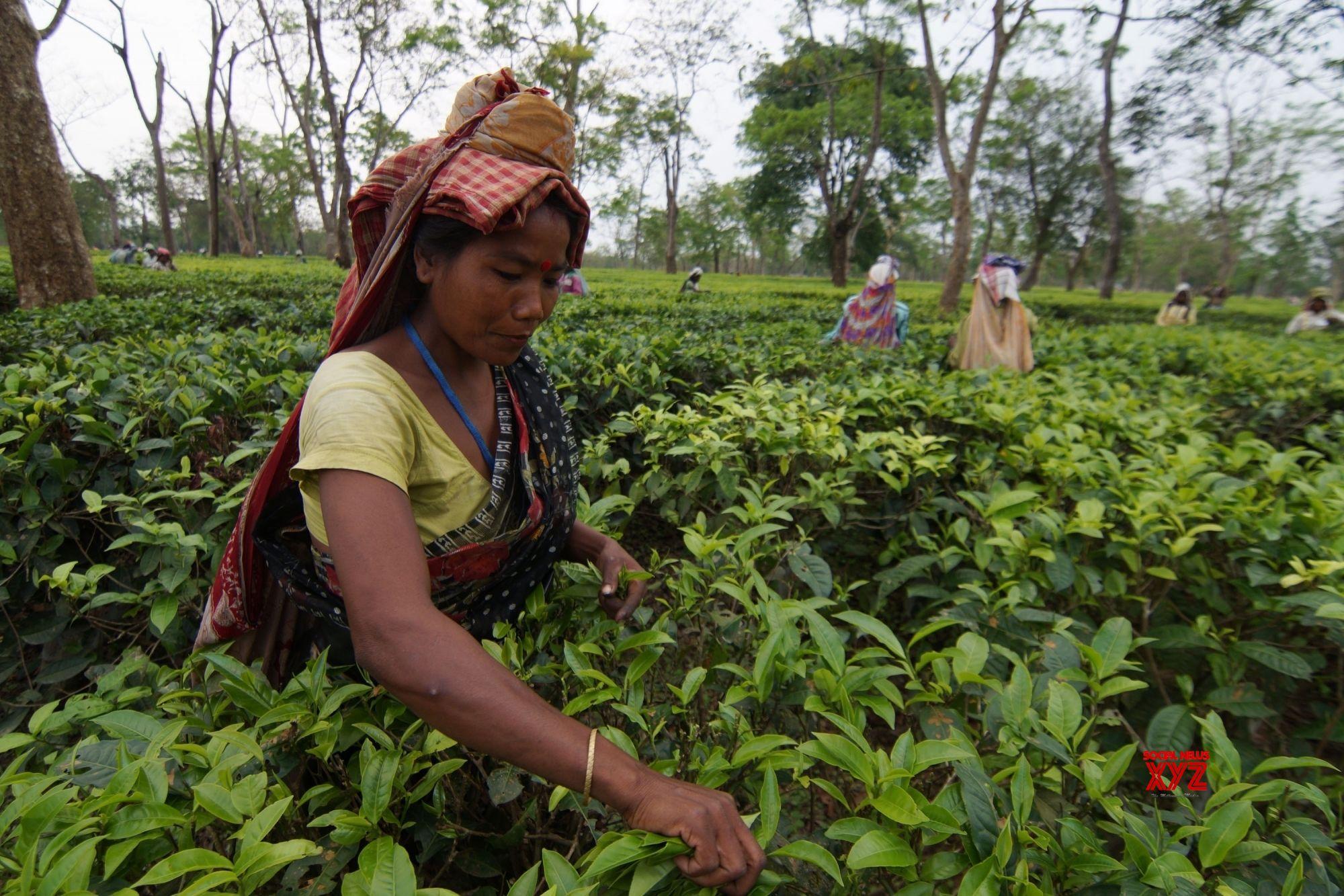 Tea garden workers' bonus issue resolved