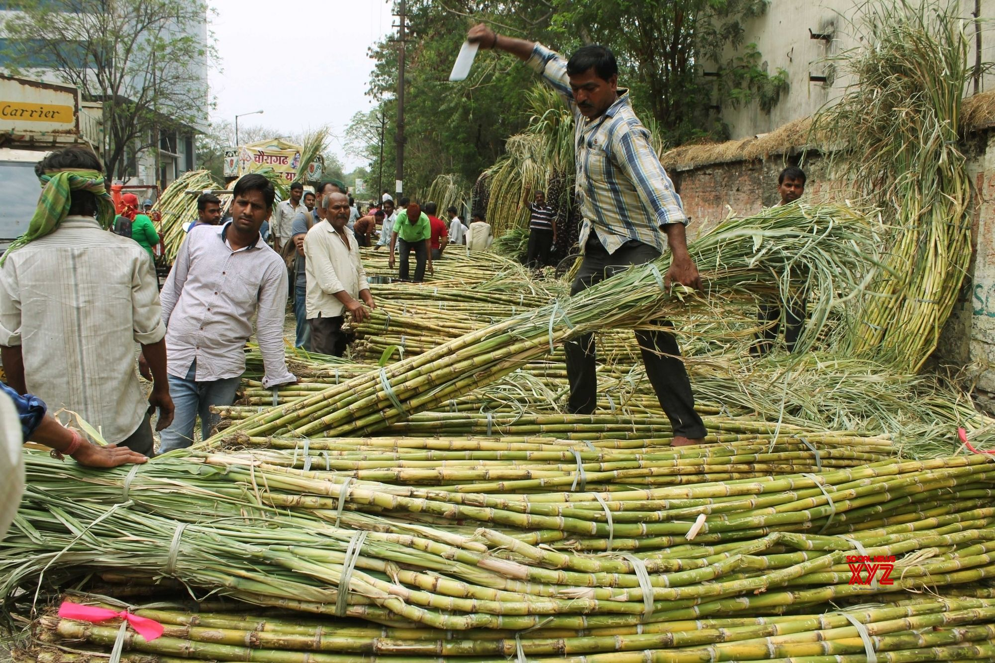 85% sugarcane dues cleared, claims UP govt
