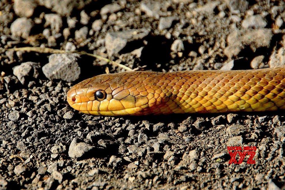 Snake creates panic in Agra shoe factory