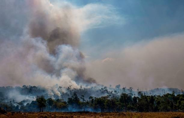 Big increase recorded in Amazon fires