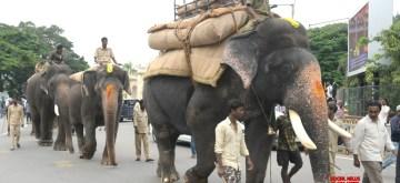 Mysuru: Dasara elephants take a stroll around Mysuru, on Sep 6, 2019. (Photo: IANS)