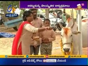 Kanuma Fest Grandly Celebrated | Across State  (Video)