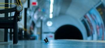 Mice squabbling wins wildlife photography award, Netizens amused.