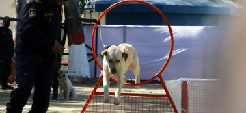 Wagah: Dogs in action during the inauguration of the first Customs Canine Center at India-Pakistan Wagah Border Post, Punjab on Feb 15, 2020. The dogs will be given training at this center as custom department plans to increase number of dog squads at major airports and other international border points. (Photo: IANS)