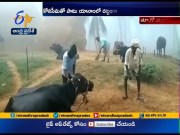 Snow Fog Covers Yanam Area | East Godavari Dist  (Video)