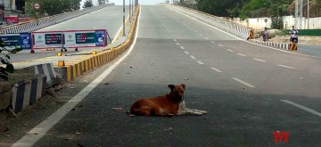 Hyderabad: A dog rests at a deserted flyover during the 21-day nationwide lockdown (that entered the 13th day) imposed as a precautionary measure to contain the spread of COVID-19, in Hyderabad on Apr 6, 2020. (Photo: IANS)