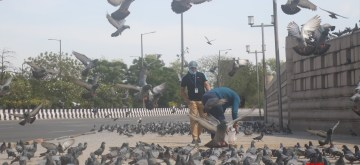 Noida: Flocks of pigeons being fed at a streedside at Noida Sector 95 during the 21-day nationwide lockdown (that entered the 16th day) imposed as a precautionary measure to contain the spread of coronavirus, on Apr 9, 2020. (Photo: IANS)