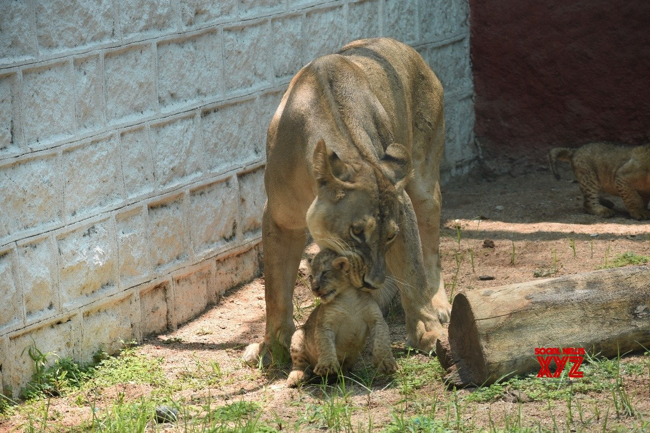 Hyderabad's Gland Pharma adopts 27 zoo animals at Rs 20 lakh