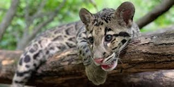 Forest dept makes plans to save wild animals from accidents