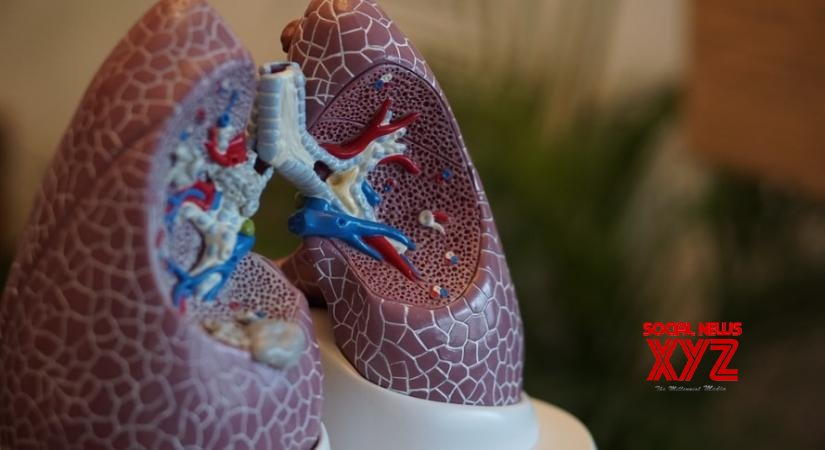 3D 'lung-on-a-chip' model to test new therapies for Covid