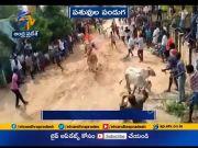 'Pasuvula Panduga' Observed with Fervour   Amid Coronavirus   in Bopparaju Palli  (Video)