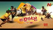 NTV:  Special Focus on Jallikattu Competition in Tamil Nadu (Video)