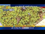 Spotted Deer Which Fell into a Well Rescued | by Forest Officials | in Kerala  (Video)