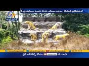 All Zoo Parks & Eco Tourism Centers Closed in AP | Forest Officers to Monitor the Situation  (Video)