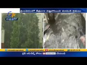 Incessant Rains Wreak Havoc in Several Places in AP |  Paddy Farmers Forced in to Losses  (Video)
