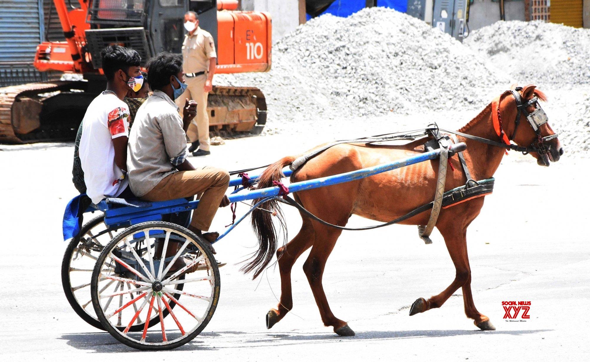 Bengaluru : People using horse carts to reach their destination at KR Market during lockdown in Bengaluru. #Gallery