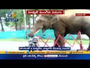 Watch | Elephant Eats Helmet at Guwahati  (Video)
