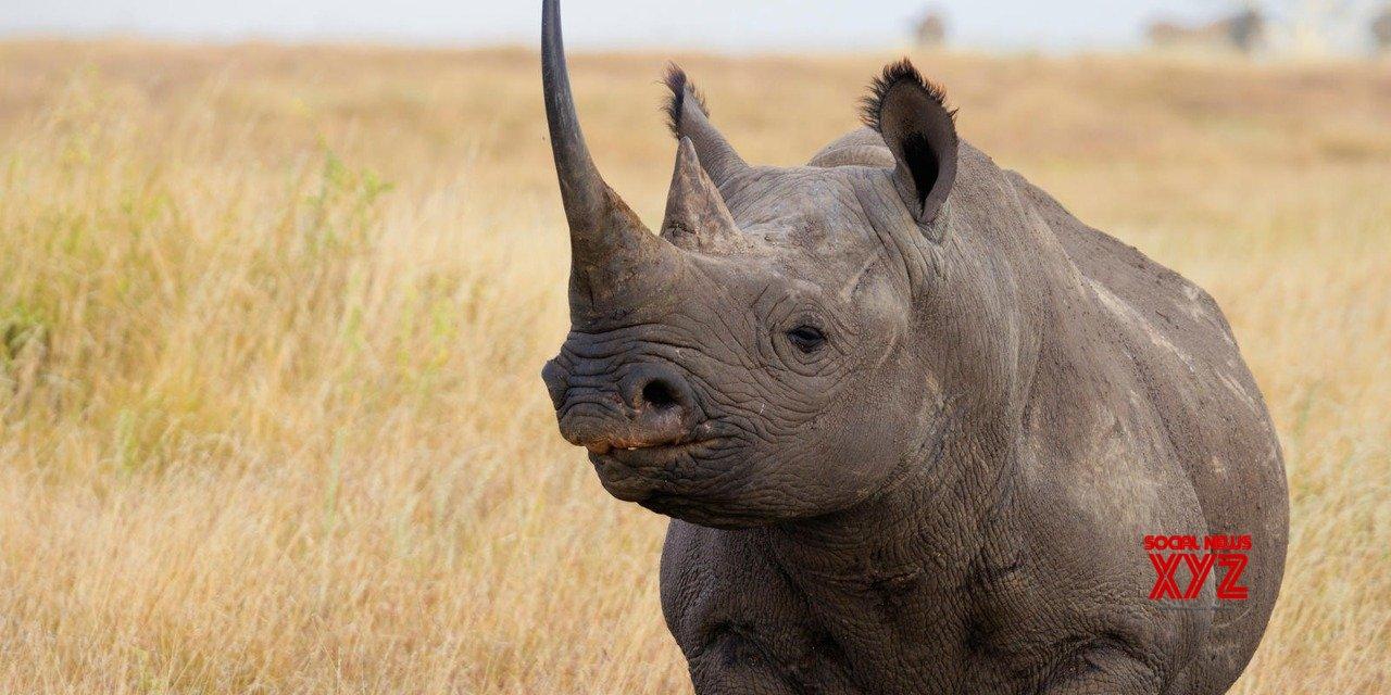 Uganda reopens rhino sanctuary to tourists
