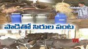Meet This Brothers from Jaggapuram | Getting Profits from Dairy Farming | in Guntur Dist  (Video)